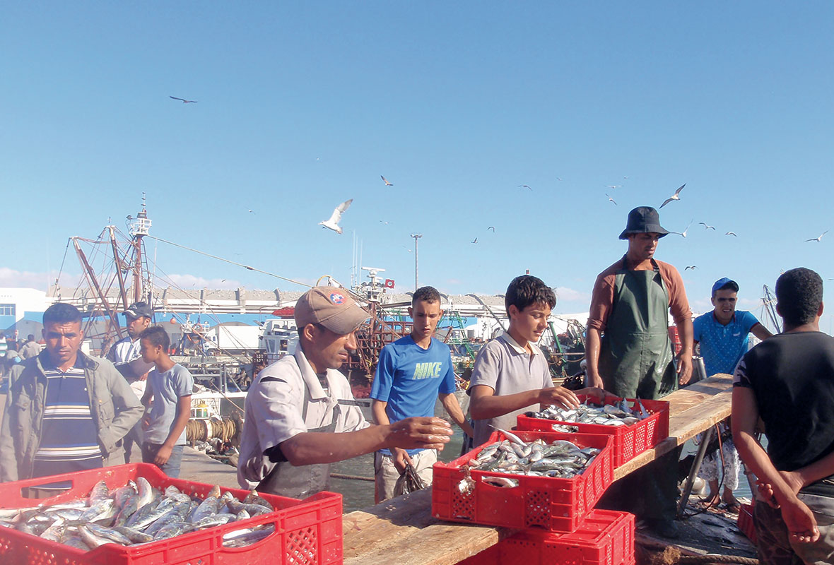 Disembarkation of sardines at the port of Laâyoune (photo by author)